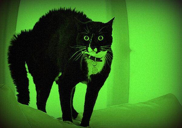 Испуганный кот. Источник: Яндекс. Картинки.