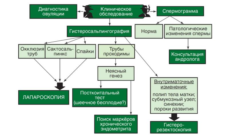 Алгоритм обследования супружеской пары с бесплодием .