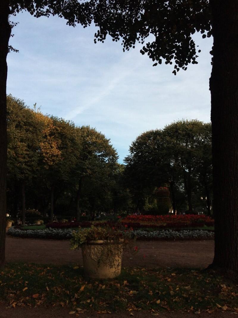 «И где красота?! Где чудесный парк?!»