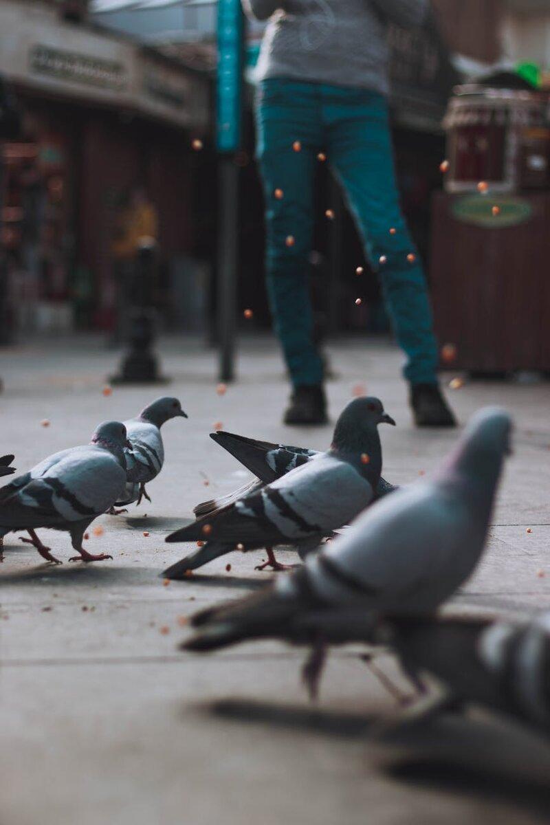 Голубь сломал крыло, но его спасла женщина врач. А его голубка, его пара - не дождалась своего самца.