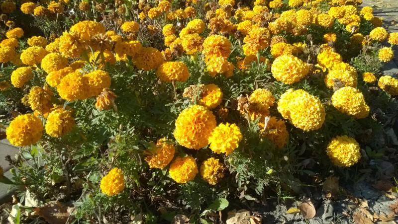Созерцание цветов - хорошее средство от уныния