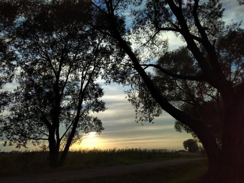 Закатный свет. Время съемки 18:30, 31 августа. Подмосковье