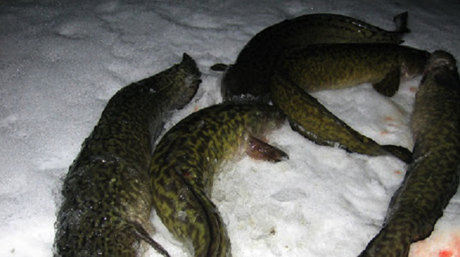 Три причины, почему я считаю, что рыбалка - это не женское занятие