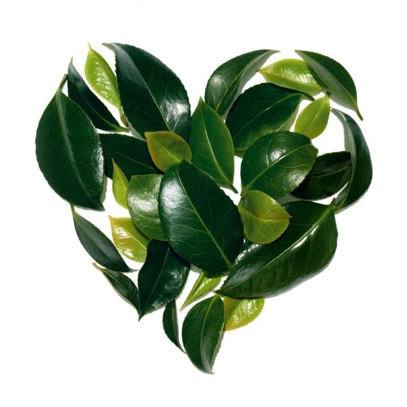 История Clarins – это история французской семьи, которая верит в силу растений и науки и исповедует уважительное отношение к нашей планете и её ресурсам
