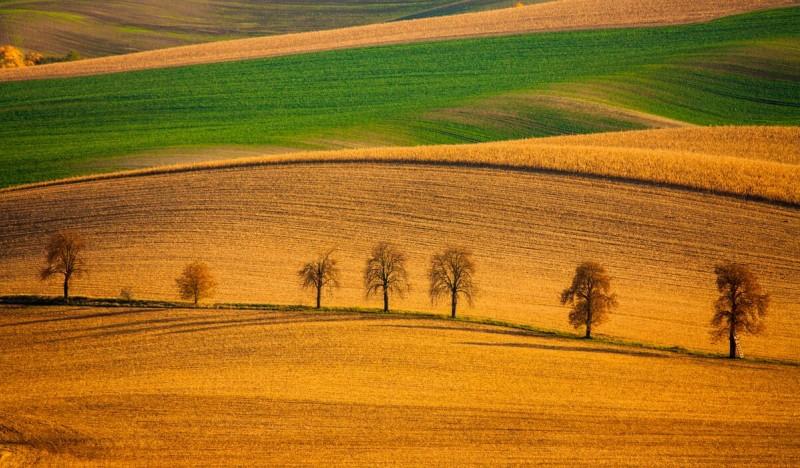 Моравские поля