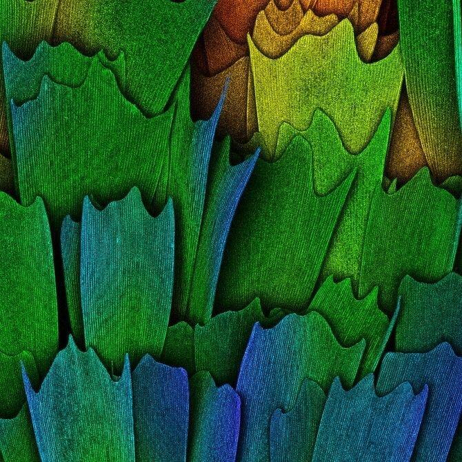 Красота под микроскопом — природа, животные и человек, которые выглядят сказочно и загадочно