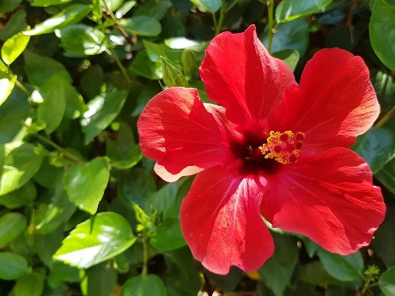 6 растений в доме, которые мешают женщине построить личную жизнь