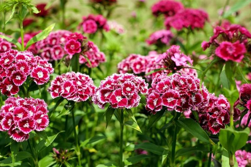 Цветок - сама красота и нежность, её пряный аромат тонок и благодарен