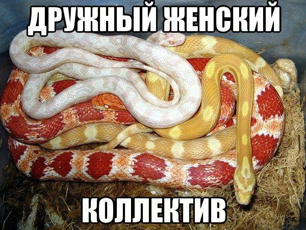 Яндекс источник