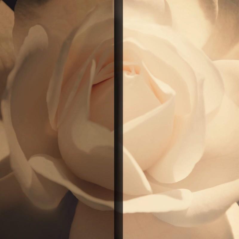 Как мы убиваем нашу красоту