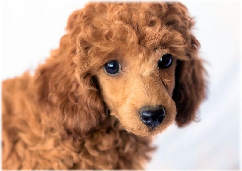 Ум и красота - идеальное сочетание. Топ 10 самых красивых пород собак