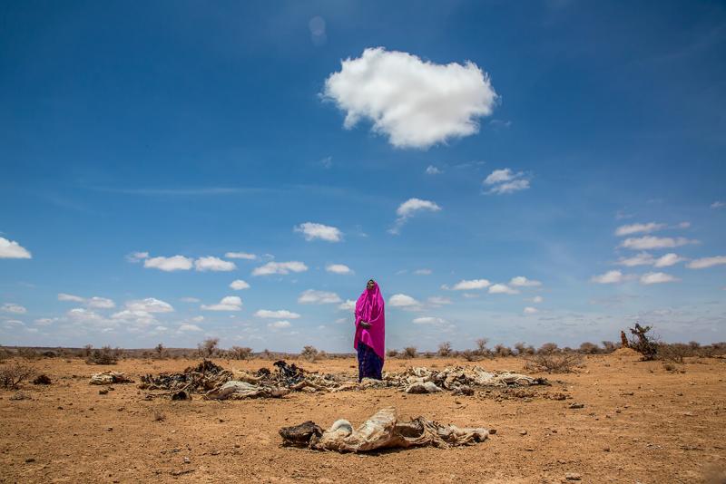 45-летняя Амина Сулейман Гас стоит среди трупов своих мертвых животных, сложенных для сжигания за пределами территории, где она прожила 10 лет в деревне Барвако, в 20 км от пустыни от города Анайбо в центральном Сомалиленде. Она отправила большую часть своего скота на запад вместе со своим соседом в ноябре 2016 года, когда засуха начала усиливаться и опасения, что они не выжили, в марте 2017 года. Барвако была деревней, в которой проживало 100 семей, но еще 245 приехали из окрестностей из-за засухи. . Как член Деревенской сберегательно-ссудной ассоциации (VSLA) Амина и ее группа поделились всеми своими сбережениями с перемещенными семьями, не оставив им ничего. Не менее 6,2 миллиона человек, более половины населения.