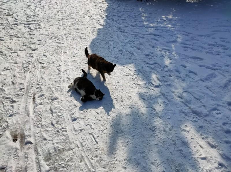 А котики даже зимой требуют ласки и, конечно, еды!