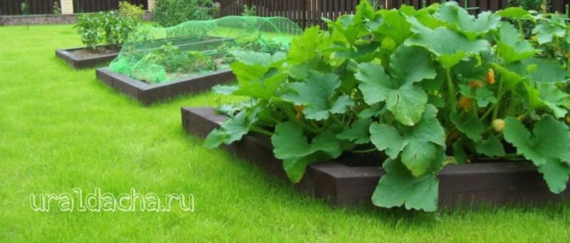 Варианты высоких грядок, красивый участок и огород