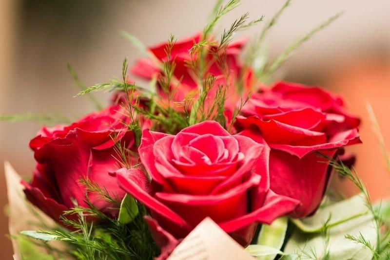 Изображение Christo Anestev с сайта Pixabay С праздником вас, дорогие девочки! С новым весенним днем!