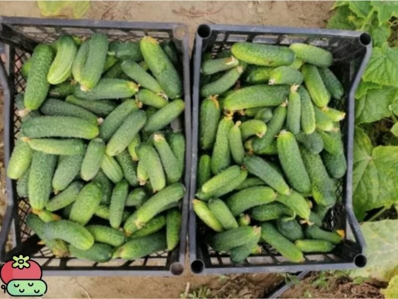Я удивилась, когда женщина купила 10 пачек семян огурцов одного сорта. Она рассказала зачем ей столько.