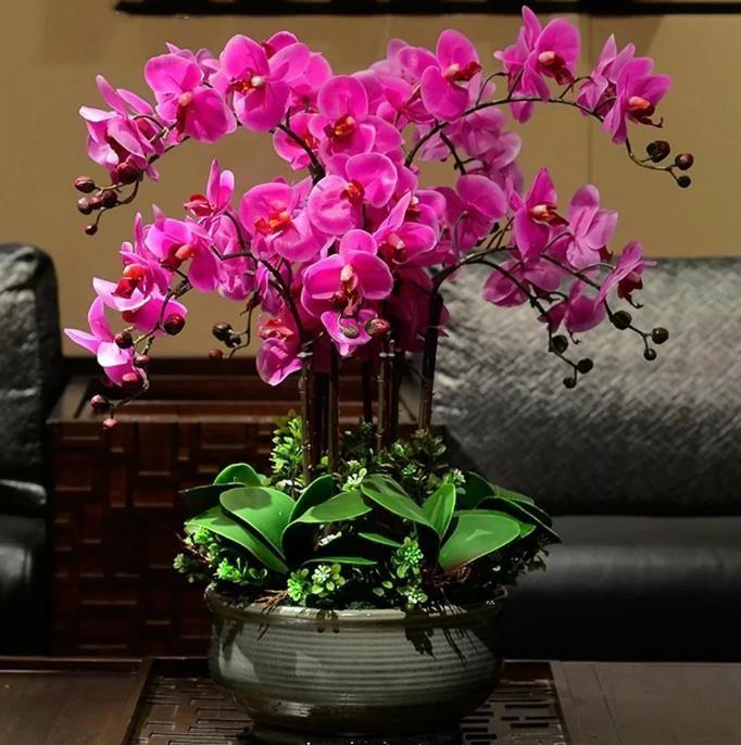 Йод и перекись водорода для красоты, здоровья орхидей!