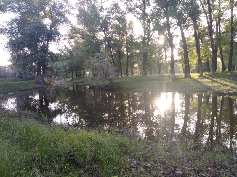 Разлив реки Ахтубы в мае. Село Заплавное Заповедке